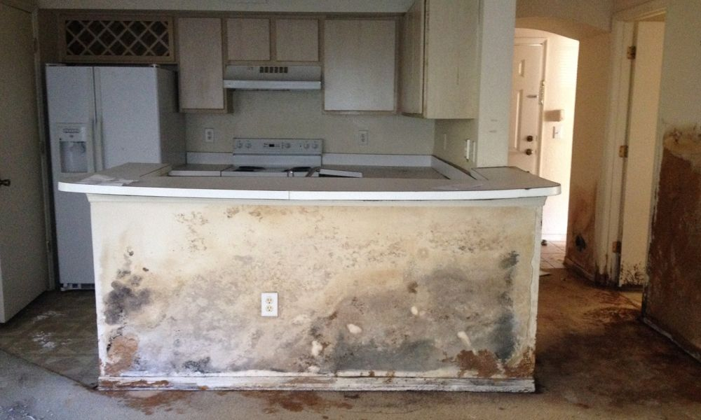 Clearwater Mold Restoration & Mold Remediation in Florida